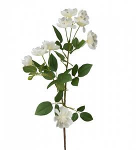 Bilde av Mr Plant - epleblomst - 70 cm
